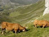 Asturiana de los Valles