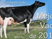 Llera Goldwyn Gala