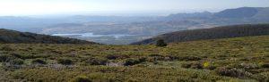 ganaderia-cumbres-guadarrama-sierra