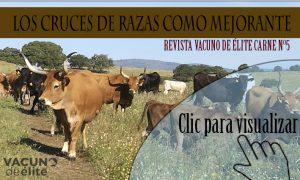 crucesrazascarne5