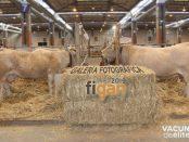 figan2019-galeria-fotografica-portada